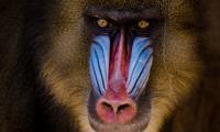 Mandryl Kokuś, trafił do ośrodka z chorzowskiego zoo